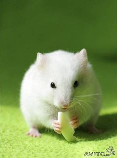 I think this is not a mouse, but it is close enough and darned cute!