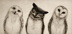Available for purchase  Owls Curious Drawing 3 Three Art Classic Modern Cute Birds Black and White Sepia Adorable Illustration