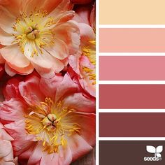 Choose a color from the color blocks and it will give suggestions of what looks nice with that color