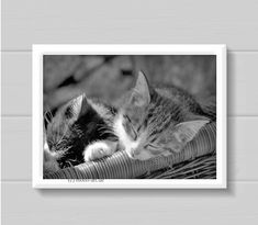 #Tierfotografie #Naturfotografie #Photographie #Katzen #schlafende Katzenbabys #Kitten #Tierbabys Kätzchen #mooli art photography #dohero #dohero handarbeit Cats, Animals, Photography, Animal Photography, Nature Photography, Photo On Wood, Crocodiles, Handarbeit, Gifts