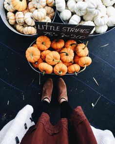 Pumpkin patch style.