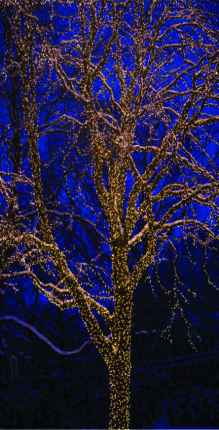 8 Best Christmas Lights Images In 2016 Christmas Lights Xmas