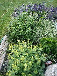 Autor: Tulipánka My Secret Garden, Garden Design, Herbs, Gardening, Plants, Author, Lawn And Garden, Herb, Landscape Designs