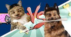 Batalha de Rap: Gato Vs Cão