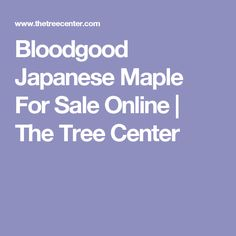 Bloodgood Japanese Maple For Sale Online | The Tree Center