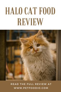 Halo cat food may not be as healthy as you think it is! Read this honest Halo cat food review and learn what other cat owners have been saying about this food for yourself! Itchy Rash, Cat Food, Cat Breeds, Halo, Health Care, Kitten, Pure Products, Reading, Alone