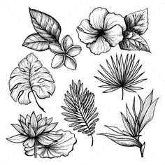 Buy Tropical Leaves Set by macrovector on GraphicRiver. Black and white hand drawn tropical leaves and flowers set isolated vector illustration. Editable EPS and Render in J. Tropical Flowers, Tropical Flower Tattoos, Tropical Leaves, Tropical Forest, White Flowers, Leaf Drawing, Plant Drawing, Drawing Flowers, Hibiscus Flower Drawing
