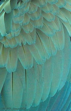 Macaw feathers in turquoise Shades Of Turquoise, Shades Of Blue, Patterns In Nature, Textures Patterns, Henna Patterns, Fotografia Macro, Natural Forms, Beautiful Birds, Beautiful Textures