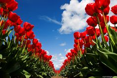 Can't wait for the tulips!