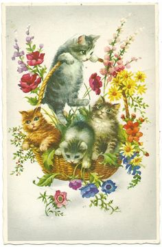 きれいな色の花々とネコ達/猫/アンティークポストカード/絵葉書 - ヤフオク!