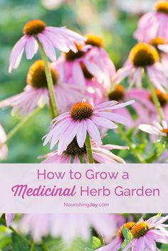 Did you know that both yarrow and goldenseal can help a cut clot? Or than echinacea is a great way to get rid of a cold before it starts? Grow a medicinal herb garden to help take care of the day-to-day medical needs of your family.: