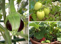 Consejos para empezar tu Huerta Organica. Garden Care, Little Gardens, Organic Gardening, Agra, Garden Plants, Home And Garden, Medicinal Plants, Herbs, Garden