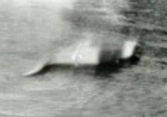 Loch Ness Monster?  First photo ever taken.