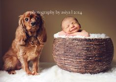Pin for Later: These 34 Newborns and Their Furry Best Friends Are the Best Things You'll See in 2016