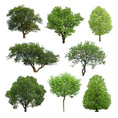 What Kind of Tree Should I Plant?