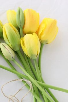 Yellow Tulips #flowers