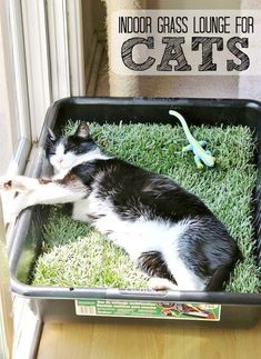 Make a grass lounge for your indoor cat with a cement mixing pan and a sheet of sod from your local hardware store. (Only $10 for the tray and sod new sod costs about $2.50 in our area and lasts up to 5 days indoors.)