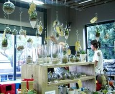 Wellness Warehouse's Green Living Store, Cape Town, South Africa