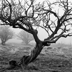Tree in fog by Rich Burroughs; kind of reminds me a tree on my grandmother's farm....= )