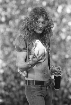While performing on June at San Francisco's Kezar Stadium, Led Zeppelin had a thousand doves released at the start of Stairway to Heaven. One circled the stage and landed on Robert Plant's hand. Robert Plant Led Zeppelin, Preston, Jimmy Page, Stairway To Heaven, Music Love, Rock Music, Woodstock, Hard Rock, Amor Musical