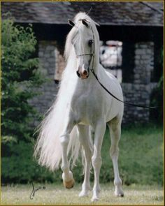 Horse Trainers | Parelli natural horse training