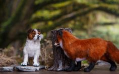 Dollhouse Miniature OOAK Fox and Jack Russell Terrier