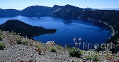 Flora of Crater Lake Taken near Watchman's Peak  New images added to SEImagesonline, a Fine Art America website.