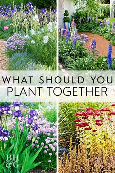 What plants go together? Pairing plants by color, season of bloom, and shape can sometimes be confusing. So, here's a list of some of our favorite combinations with tips on how to put them to good use in your landscape. Flower Landscape, Landscape Edging, How To Landscape, Landscape Curbing, Fantasy Landscape, Abstract Landscape, Landscape Architecture, Landscaping On A Hill, Landscaping Tips