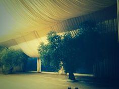 Carpa nupcial en un olivar. Los olivos, dentro de la carpa como decoración natural. #proveedores #bodasrústicas