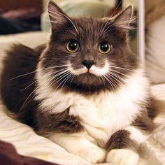 20 Gatos fofos que ficaram famosos na internet | ROCK'N TECH