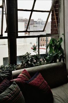 Isabel Wilson's window plants in Brooklyn, USA