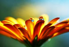 In the Kingdom of Flowers: Delicate Macro Photography - Daddu