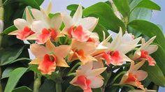 Beautiful Flowers 50