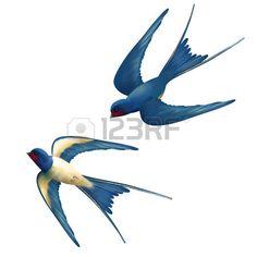 Vecteur deux hirondelles volent sur fond blanc Banque d'images