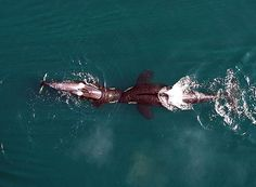 A Drone Captured These Never-Before-Seen Views of Killer Whales | TakePart