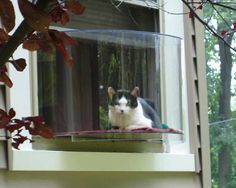 Cat Window Solarium.... - Hummmm... I see