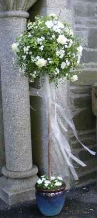 standard bay trees decorated for weddings with ribbons - Google Search