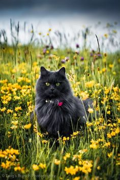 Check it out - Beautiful Cats Pictures xo Pretty Cats, Beautiful Cats, Animals Beautiful, Cute Animals, Pretty Kitty, Cute Kittens, Cats And Kittens, Crazy Cat Lady, Crazy Cats