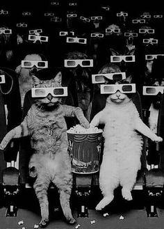 Toy Art, Psychedelic Art, Crazy Cat Lady, Crazy Cats, Art Jouet, Funny Animals, Cute Animals, Fantasy Kunst, Surreal Art