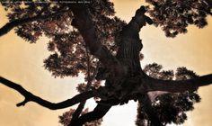 https://flic.kr/p/GohZzZ | INHOTIM . May 2016  37 | Inhotim, Museo y parque ecologico natural. Brumadinho, Minas Gerais. Fotografia: Artexpreso . Rodriguez Udias . *Photochrome Artwork Edition / BH, Brasil . May 2016 .. Website: rodudias.wix.com/artexpreso #Inhotim #artexpreso #photochrome #minasgerais #soubh