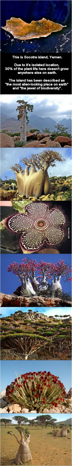 Check out the island of Socotra. Isolated evolution.