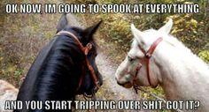 """Hahaha fuck. I remember, first lesson, my dad walked up & spooked the horse a little bit & it was like """"shit!"""" """"Okay, we're fine, that wasn't expected"""""""