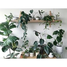 - • i n d o o r  j u n g l e • - Some of the #plantgang and I'm starting to realise that my addiction to plant hoarding is very real 😅🌿