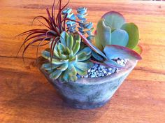 Succulents with air plant