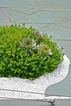 Cute little succulent garden