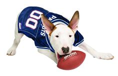 Official NFL New England Patriots Football Jersey for your Dog. They come  in all sizes! So cute! www.dogfootballjersey.com 9d8411a68