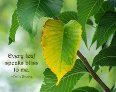 Nature Quotes Leaves Ideas For 2019 Photography Captions, Nature Photography Quotes, Summer Nature Photography, Leaf Photography, Leaf Quotes, Tree Quotes, Home Quotes And Sayings, Mother Nature Quotes, Nature Words