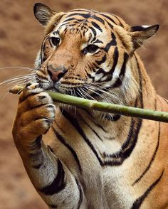 And now for the beautiful sounds of Connor on the bamboo flute. Photo by @stampdelights #wildlives