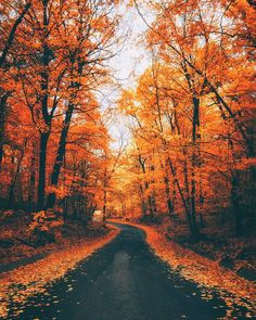 Shared by ★ S σ ℓ ɪ м α и ★. Find images and videos about nature, color and autumn on We Heart It - the app to get lost in what you love. Autumn Cozy, Autumn Fall, Autumn Nature, Autumn Forest, Autumn Scenes, Autumn Aesthetic, Fall Wallpaper, Orange Wallpaper, Autumn Photography