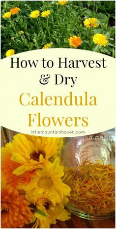 How to Harvest & Dry Calendula Flowers